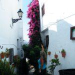 Blumenpracht Frigiliana